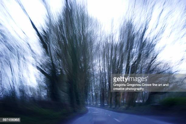 country side highway through the trees - gregoria gregoriou crowe fine art and creative photography fotografías e imágenes de stock