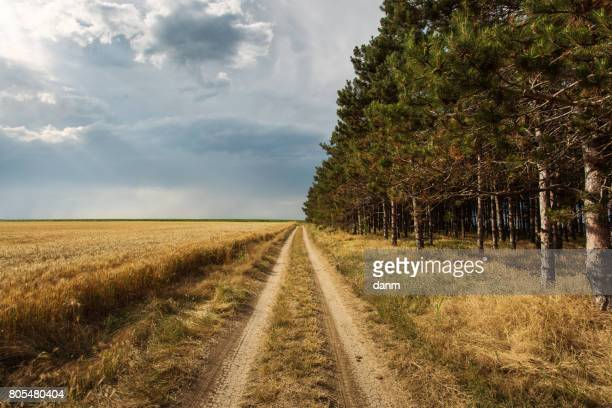 Country side road with half forest and half storm clouds