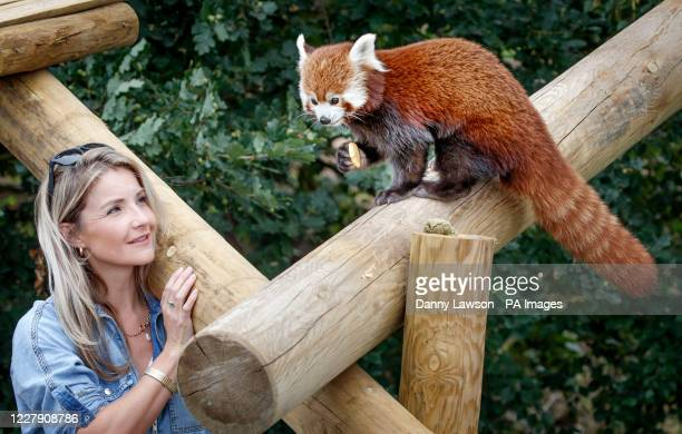 Countryfile presenter Helen Skelton feeds a red panda during a visit to the Yorkshire Wildlife Park in Doncaster to open two new expanded animal...