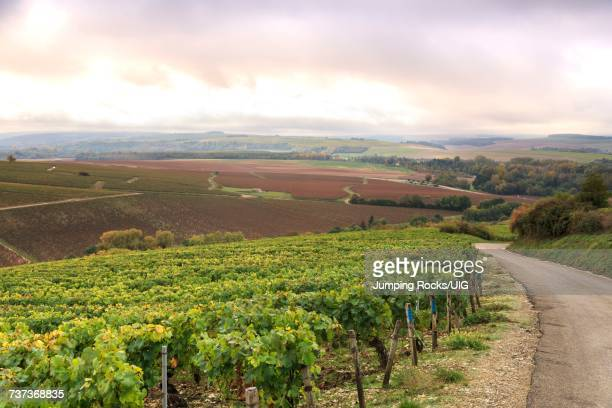 Countryside and vineyards outside of Chablis, Burgundy, France
