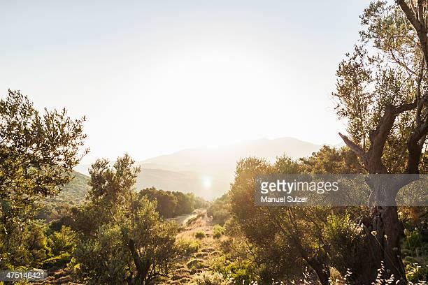 countryside at pythagoreio, samos, greece - samos stock photos and pictures