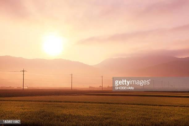 Countryside at summer, Yamanashi Prefecture