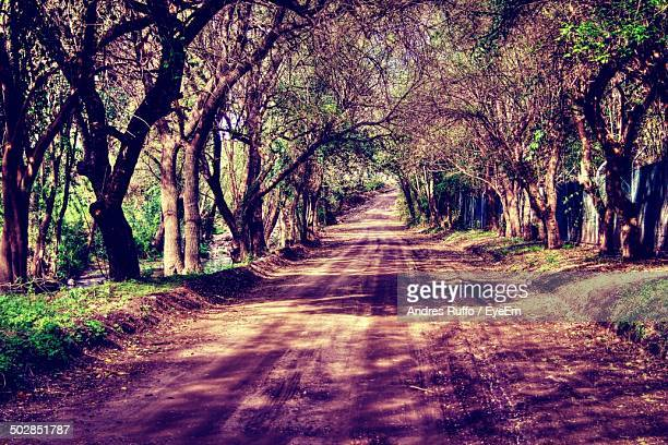 Countryside dirt road along trees