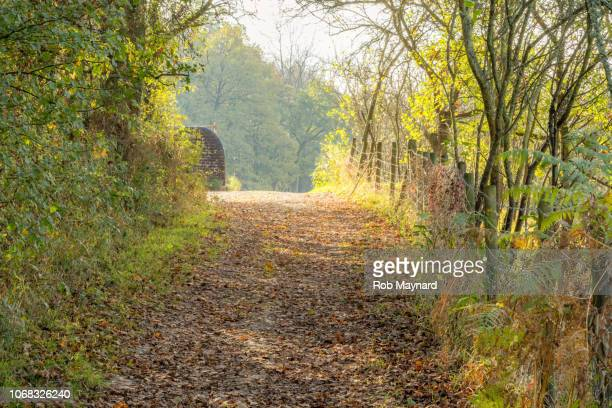 countryside footpath - bare tree stock pictures, royalty-free photos & images