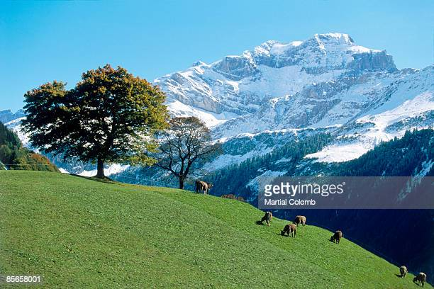 countryside in OBERLAND