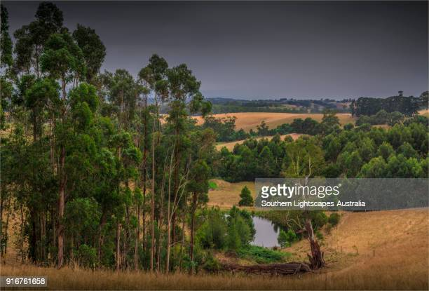 Countryside in summer at Poowong east, Strzelecki ranges, South Gippsland