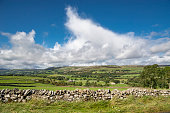 Countryside in Wensleydale, North Yorkshire, England