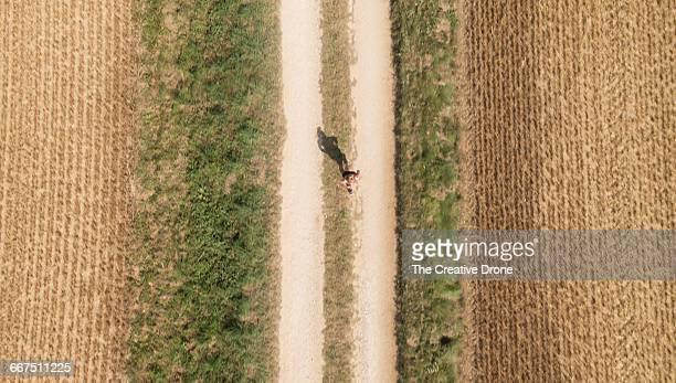 Countryside Jogger
