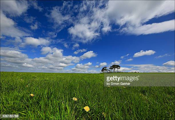 Countryside Landscape in Summer