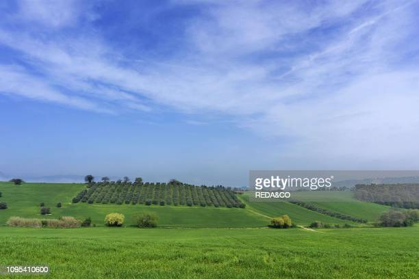 Countryside Landscape Marche Italy Europe