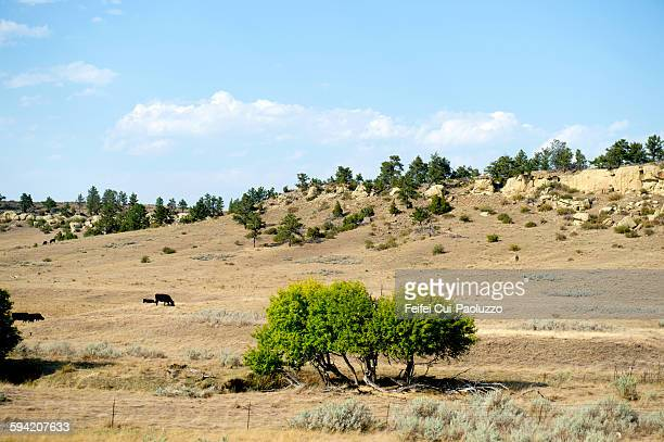 Countryside Landscape of Billings Montana State