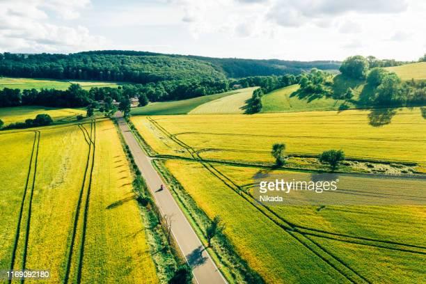 paisagem do campo com canola e campos verdes - crucíferas - fotografias e filmes do acervo