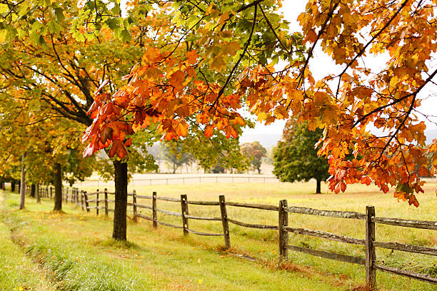 Countryside Landscape With Fence Colorful Leaves Wall Art