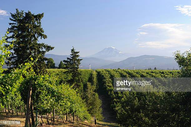 countryside of hood river - hood river stock pictures, royalty-free photos & images