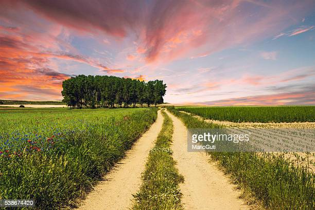 Countryside path at sunset