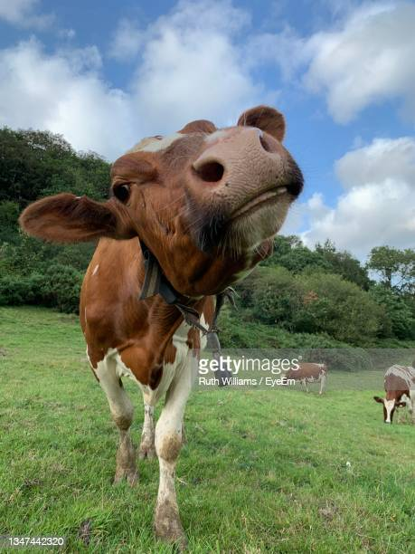 countryside - herbivorous stock pictures, royalty-free photos & images