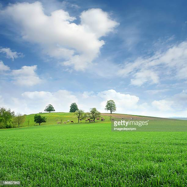 countryside - pasture stock pictures, royalty-free photos & images