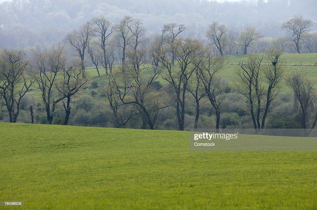 countryside : Stockfoto