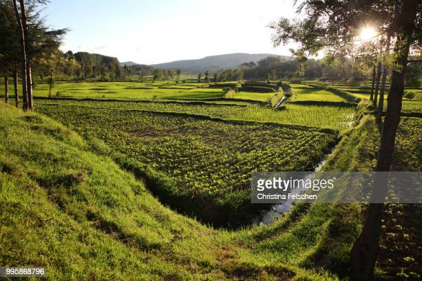 countryside - christina felschen stock photos and pictures