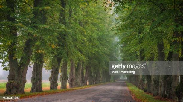 Countryside road between large trees