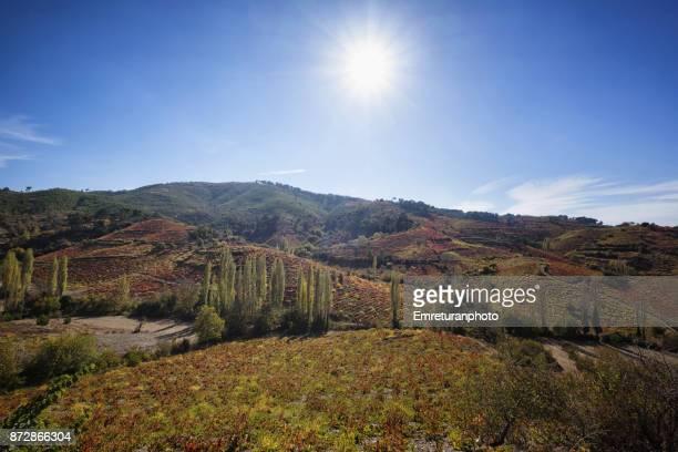 countryside scenery with autumn colors at efemcukuru,izmir. - emreturanphoto fotografías e imágenes de stock