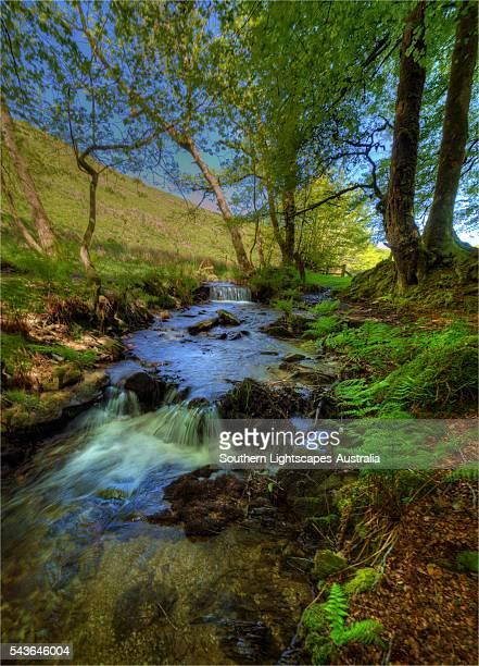 a countryside view near simonsbath, exmoor national park, devon, england, united kingdom. - exmoor national park 個照片及圖片檔