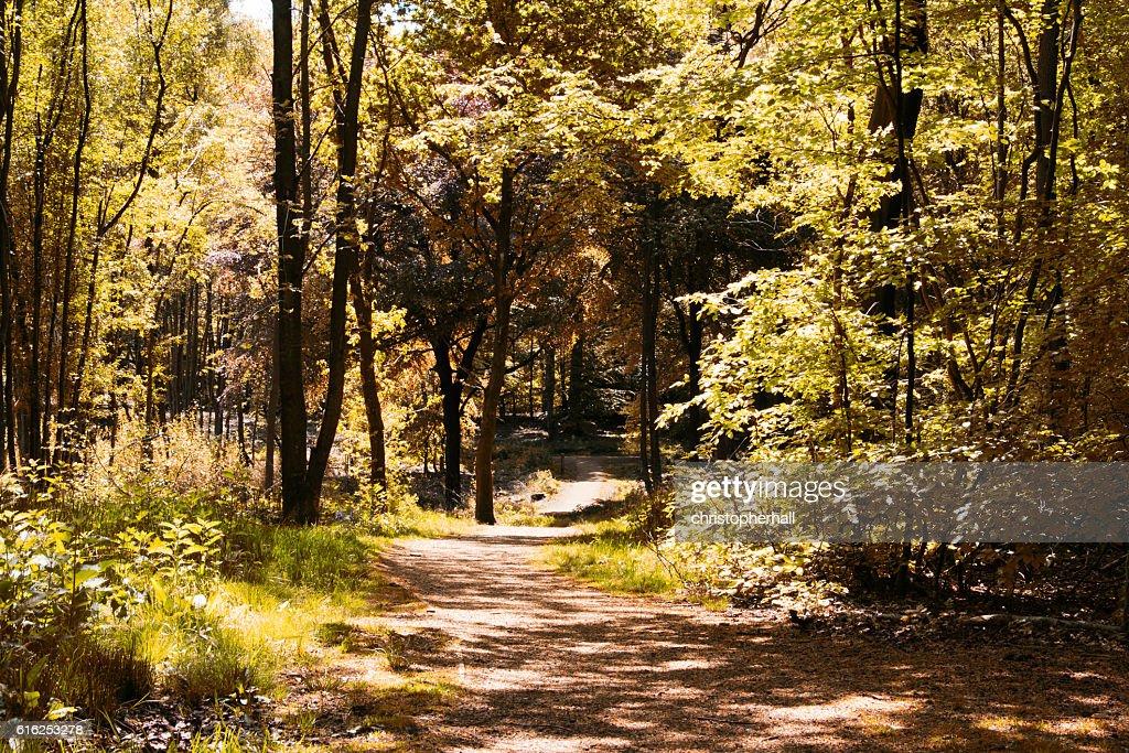 Ruta de paseo de la campiña a través de los árboles : Foto de stock
