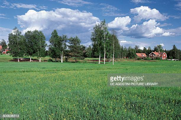 Countryside with birch trees and a village Dalarna Sweden