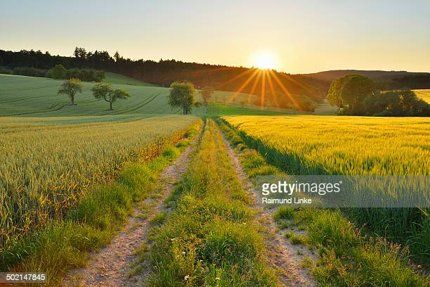 Countryside with Field Path at Sunset