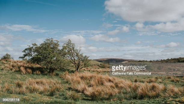 county fermanagh, irish landscape - county fermanagh stock photos and pictures
