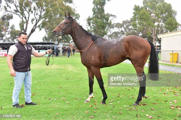 Coup De Tonnerre after winning the Echuca Newsagency BM58 Handicap at Echuca Racecourse on May 10, 2021 in Echuca, Australia.