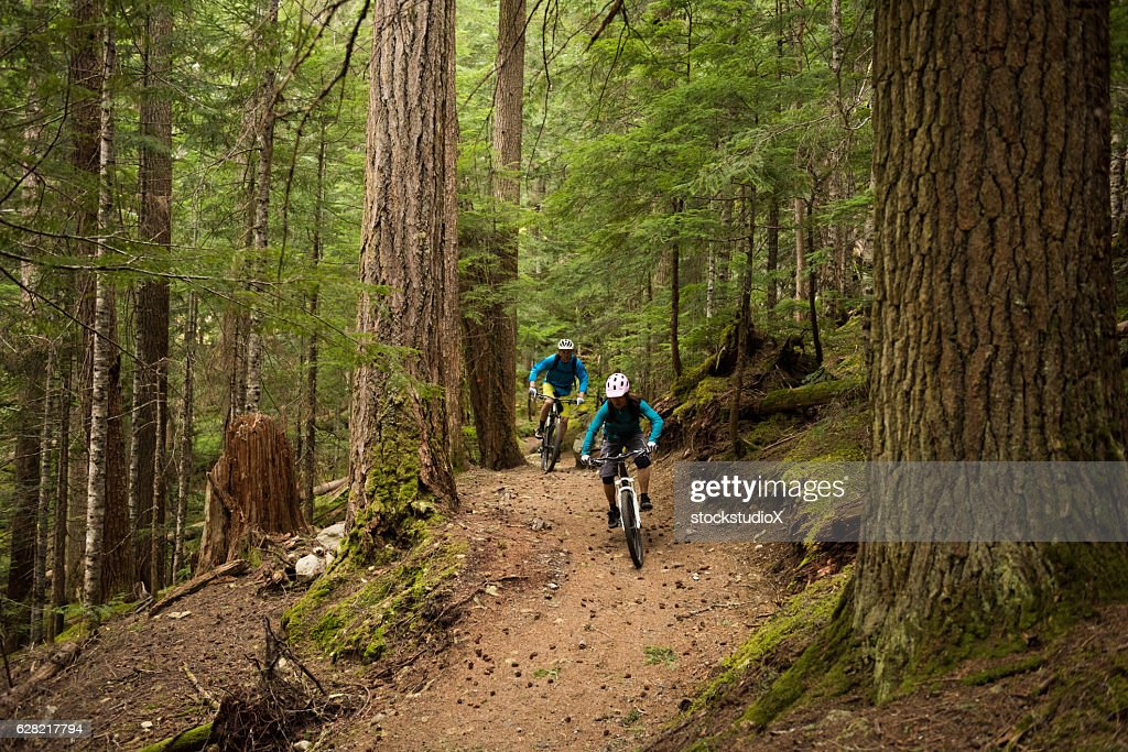 Couple biking in an old growth forest : Stock Photo