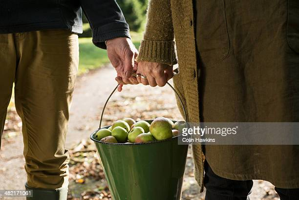 couple carrying bucket of apples - colin hawkins stock pictures, royalty-free photos & images