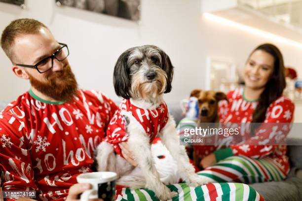 couple celebrating christmas with dogs on sofa - ugly dog stock pictures, royalty-free photos & images
