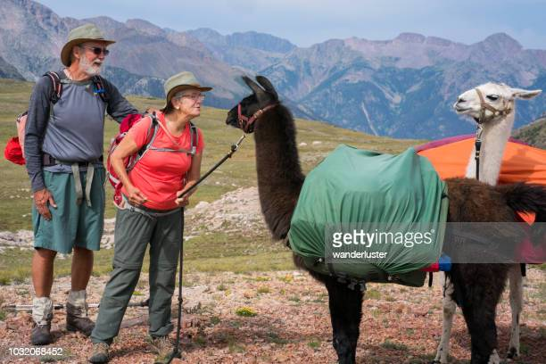 Couple communicates with llamas on the Continental Divide