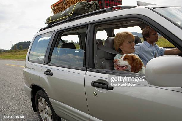 Couple driving sports utility vehicle, spaniel looking out of front passenger window