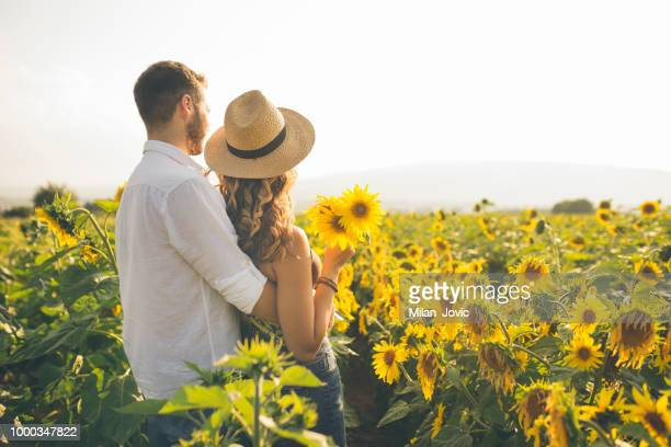 couple enjoying summer time at sunflowers field - girasoli foto e immagini stock
