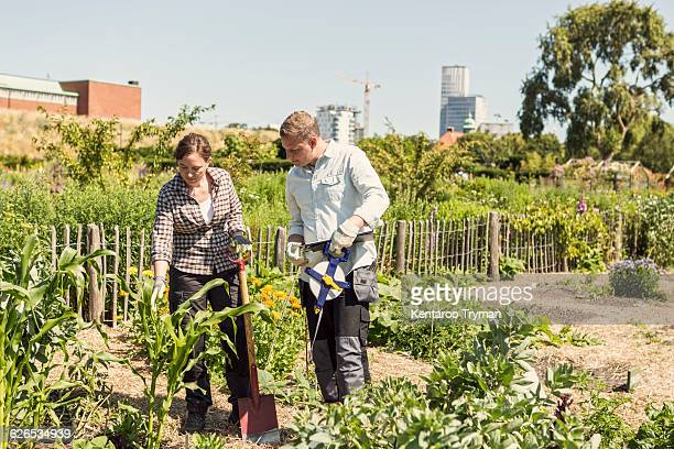 Couple examining plants at community garden