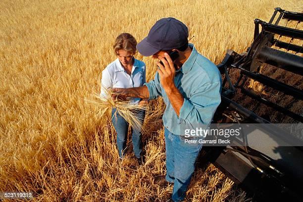 Couple Examining Wheat Plants