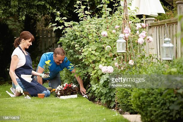 couple gardening together in backyard - jardin fleuri photos et images de collection