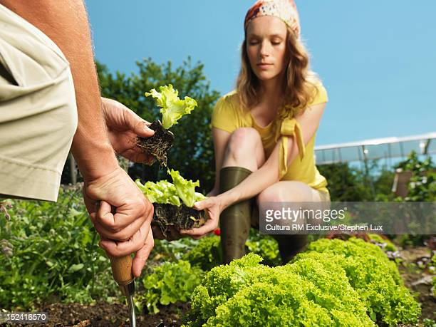 Couple gardening together outdoors