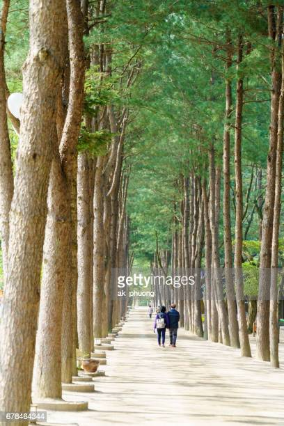 Couple hand in hand are walking along tree lines