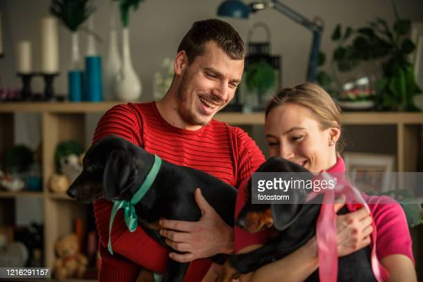 couple having a laugh while cuddling their doberman puppies - dog knotted in woman stock pictures, royalty-free photos & images