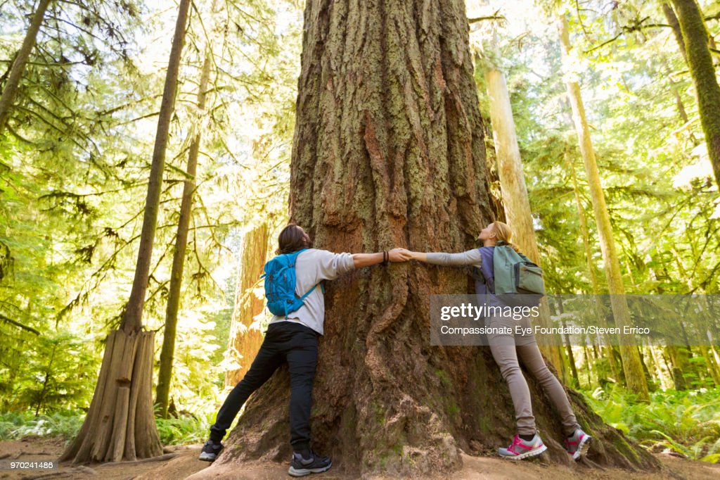 Couple hugging large tree in forest : Stock Photo