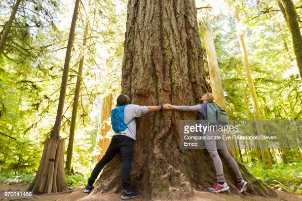 couple hugging large tree in forest - vancouver island stock pictures, royalty-free photos & images