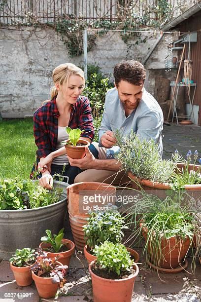 Couple in garden tending to plants