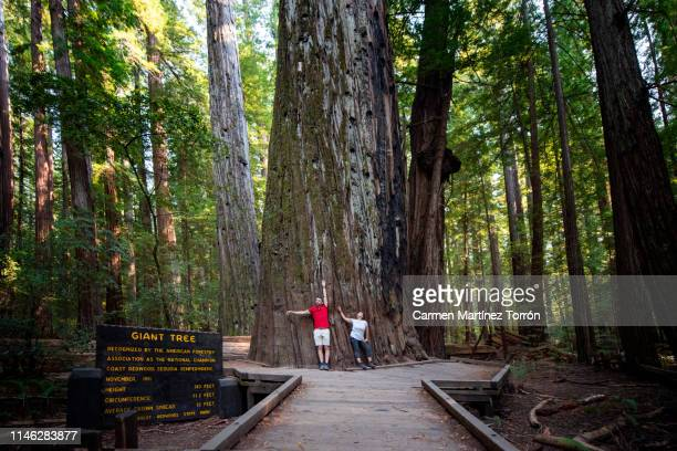 couple in humboldt redwoods state park, usa. - humboldt redwoods state park stock photos and pictures