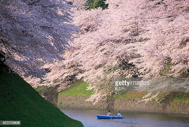 Couple in Rowboat Under Blooming Cherry Trees