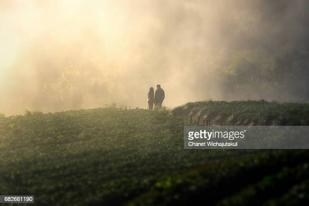 Couple in the mist in tea garden at morning.
