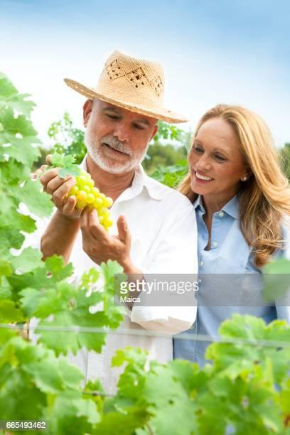 Couple dans les vignes